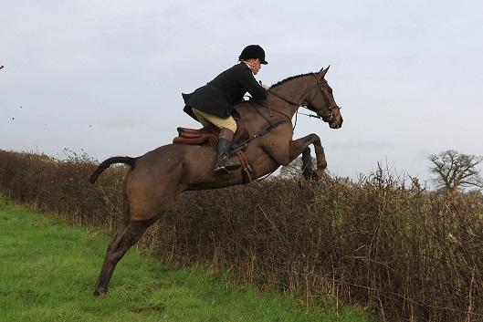 Skipper Horse Hunting