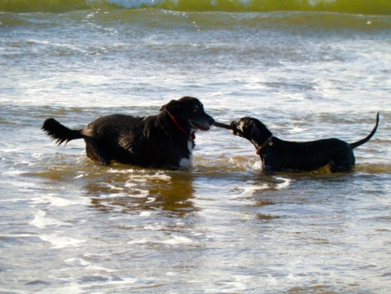 Dog friendly beaches and pubs near new homes