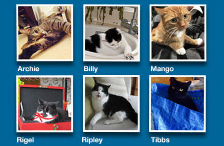 Which political cat do YOU want to be Purr Minister?